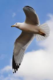 Seagulls are to be forced away from the seaside which will help the council increase the health and safety of the town.